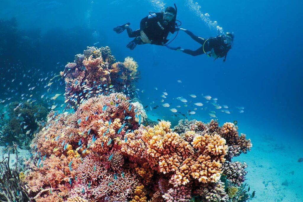 underwater shot in Great Barrier Reef
