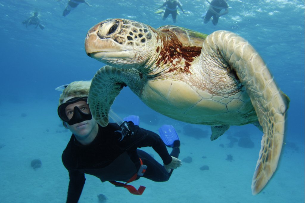 underwater shot with turtle in the Great Barrier reef