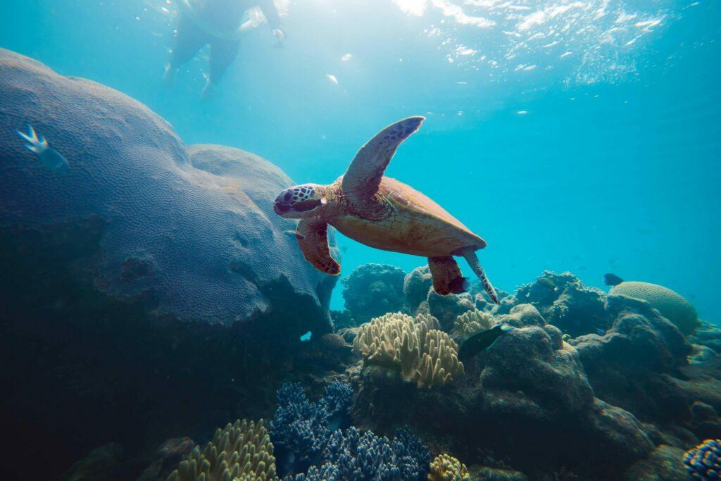turtle pictured underwater
