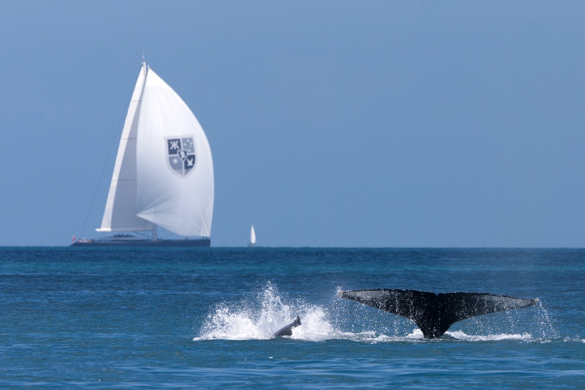 whale in foreground with large sailing vessel in background