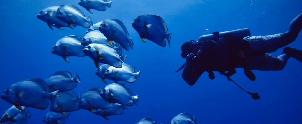 diver surrounded by fish in thailand